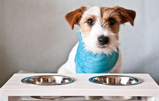 Как проявляется аллергия на говядину у собак