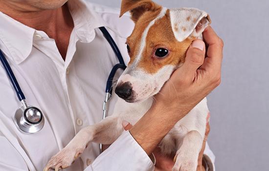 Аллергия на антибиотик у собак симптомы