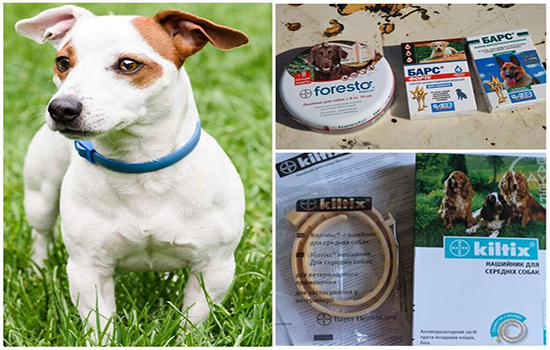 Блохи у щенка: как избавиться у щенков, средства и лечение 4