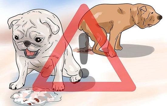 Кровавый понос с рвотой у щенка Причины методы лечения