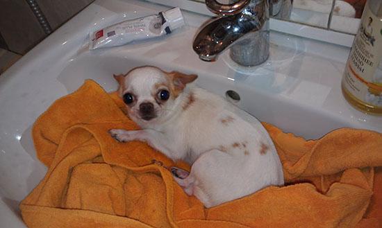 Понос у щенков лечение в домашних условиях thumbnail