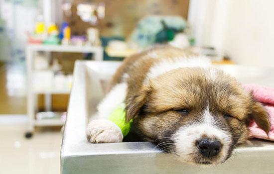 Понос у щенков лечение в домашних условиях