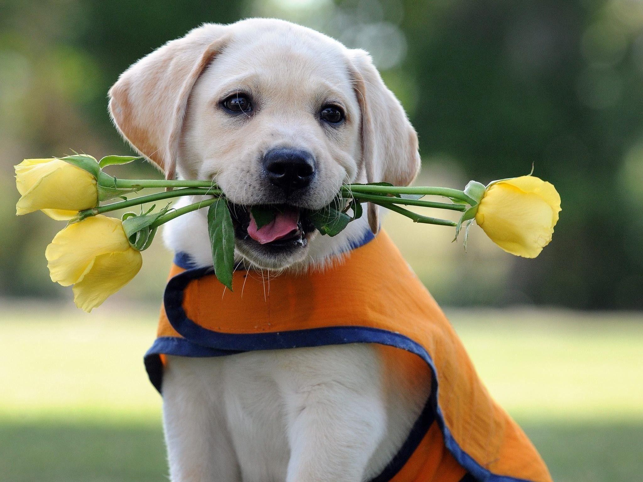 лодке смешные фото с цветами с днем рождения попасть