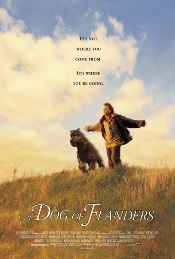 Картинки по запросу Фландрийский пес