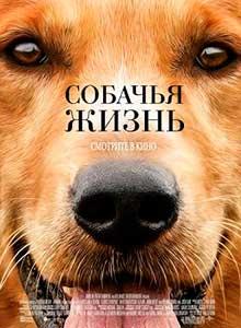 https://sobaky.info/wp-content/uploads/2019/07/02-Sobachya-zhizn.jpg