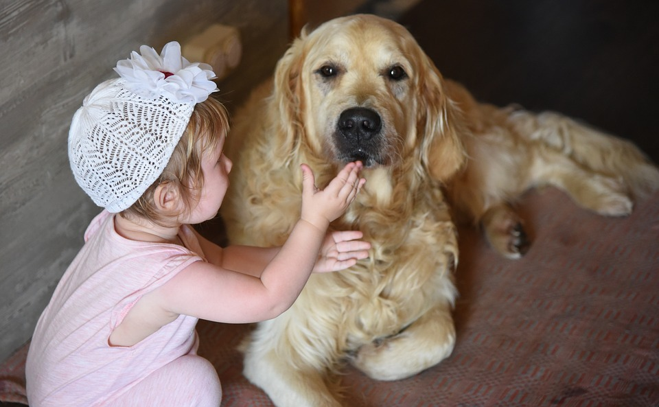 Собака, Девочка, Ретривер, Золотистый, Голден, Дружба
